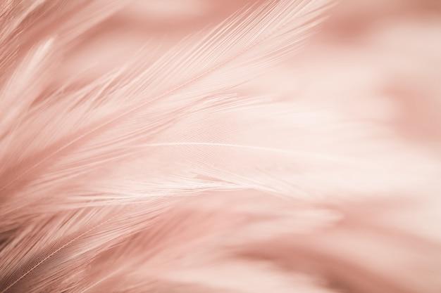 Pióra kurczaka w miękkim i rozmytym stylu na tle