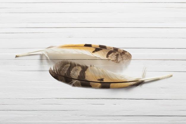 Piórka ptaka na drewnianym tle