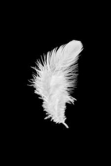 Pióro biały ptak na białym tle na czarnym tle