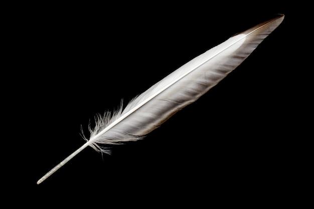 Pióro ptaka na białym tle na czarnym tle