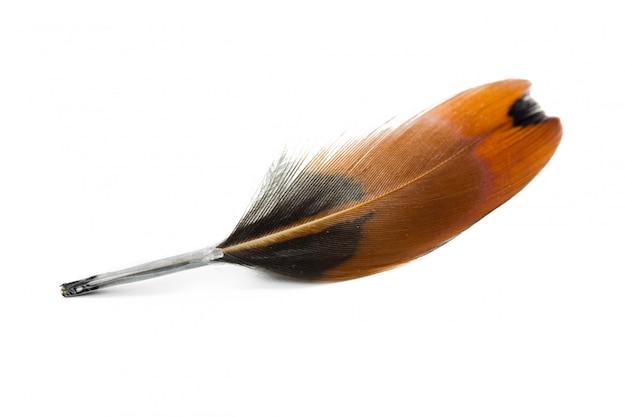 Pióro ptaka na białym tle