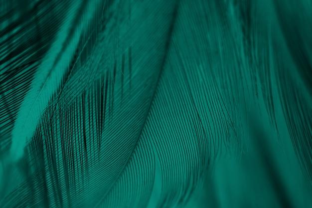 Pióro zielony tekstura tło