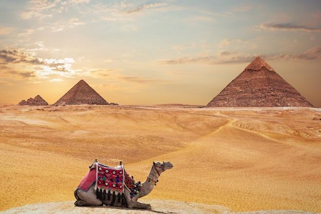 Piramida chefrena i piramida menkaure i wielbłąd, giza, egipt.
