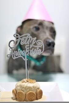 Pit bull szczeniak obchodzi urodziny, z ciastem, świeczką i kapeluszem.