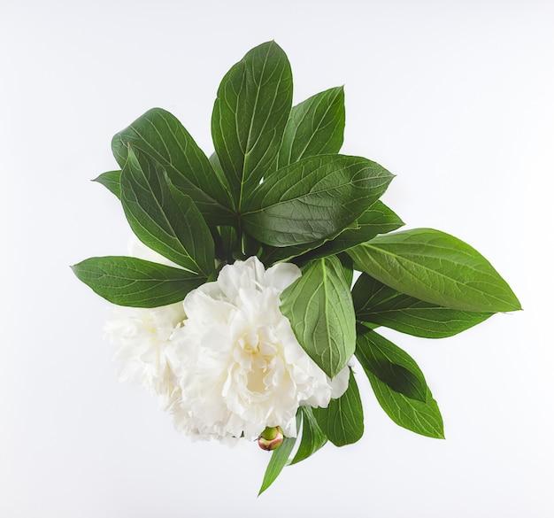 Piwonie białych kwiatów