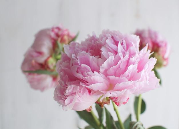 Piwonie kwiaty biały biały wazon motyw ślubny
