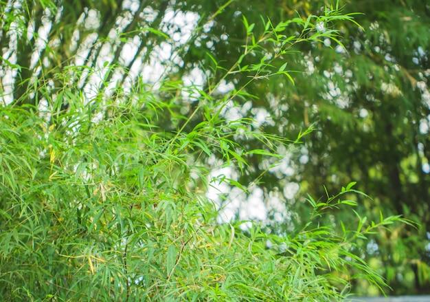 Plama drzewa liście dla natury tła i save zielonego pojęcie