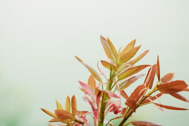 Plama drzewa liście dla natury tła