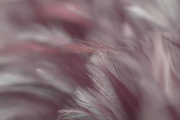 Plama ptasich kurczaków piórka tekstura dla tła