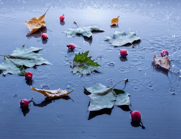 Plamy deszczu i opadłych liści w kałuży wody