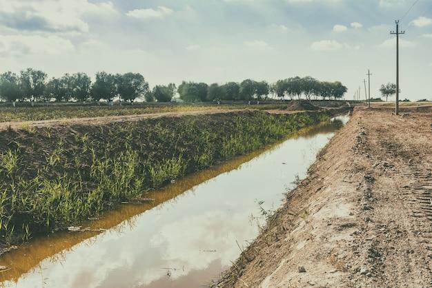 Plantacja bawełny, pole uprawne