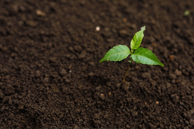 Plantacja drzew