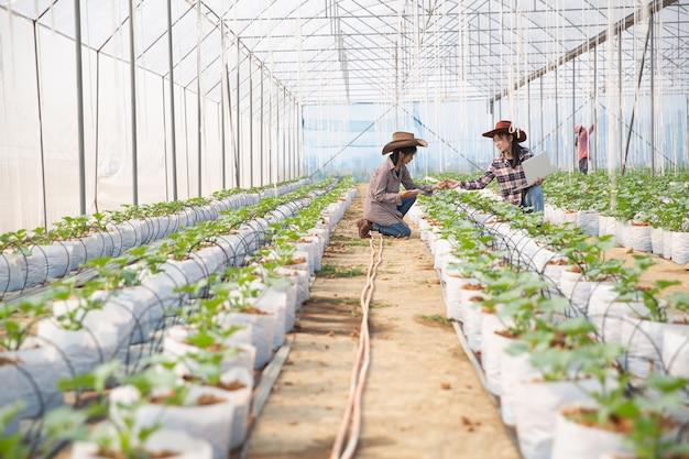 Plantacja melonów z pracownikami