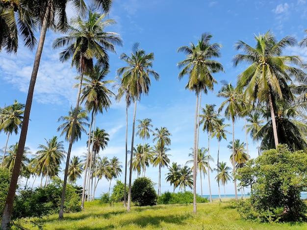 Plantacja palm kokosowych na plaży i chmura na tle błękitnego nieba