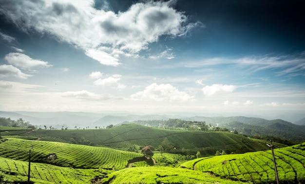 Plantacje herbaty w munnar tamil nadu w indiach