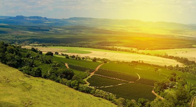 Plantation - światło słoneczne w krajobrazie plantacji kawy - brazylia