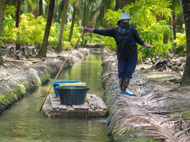 Plantatorzy kokosów nawożą drzewa kokosowe. działalność rolnicza