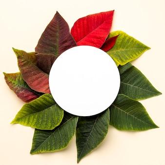 Płaska kompozycja liści z okrągłym przedmiotem