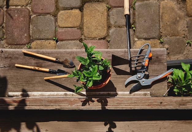 Płaska kompozycja świecka z narzędziami ogrodniczymi, nożycami ogrodowymi i glinianą donicą z posadzonymi liśćmi mięty leżącą u progu w drewnianej wiejskiej altanie. martwa natura