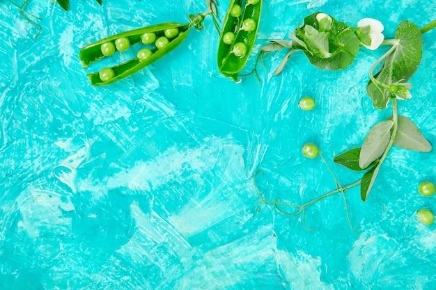 Płaska kompozycja świecka z pysznym świeżym zielonym groszkiem na niebieskim tle