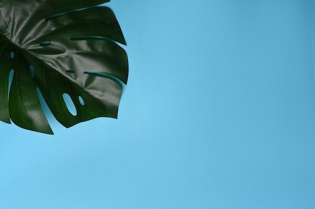 Płaska przestrzeń świecka i kopiująca. zielony liść monstera na niebieskim tle.