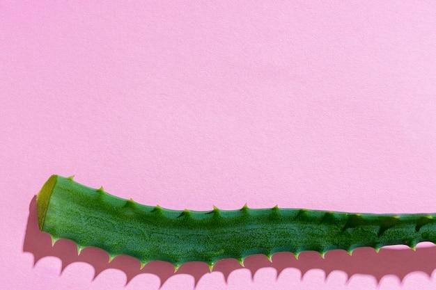 Płaska świeża roślina aloesowa