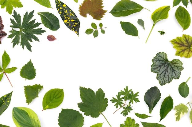 Płaska warstwa liści różnych roślin leży na białej powierzchni w formie ramki.