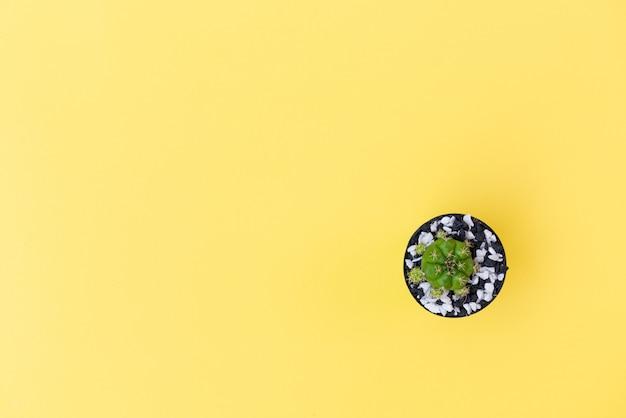 Płaski leżał mały kaktus w doniczce na żółtym tle