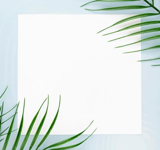 Płaski układ cienkich liści z miejscem na kopię