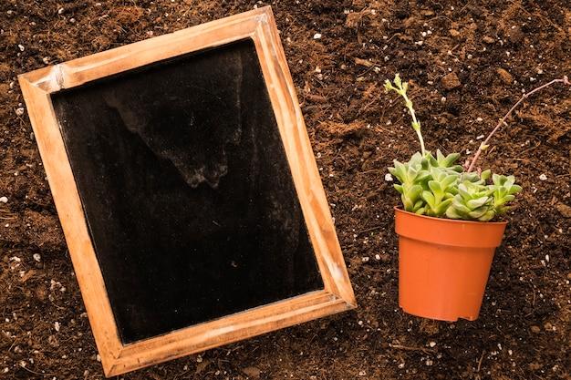 Płaski układ łupka obok rośliny