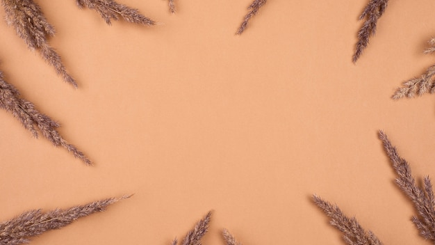 Płaski układ monochromatycznej suszonej lawendy