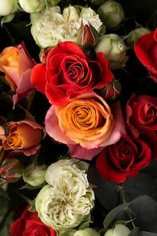 Płaski układ pięknie kwitnących kolorowych kwiatów róży