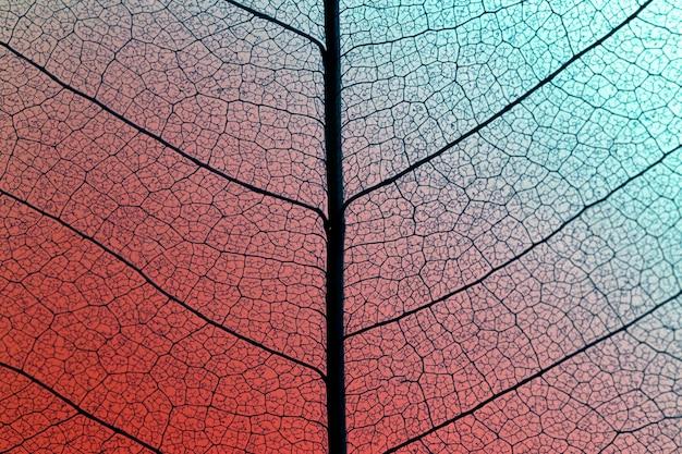 Płaski układ prześwitującej tekstury liścia