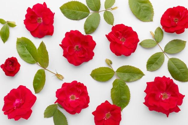 Płaski układ róż lodowych