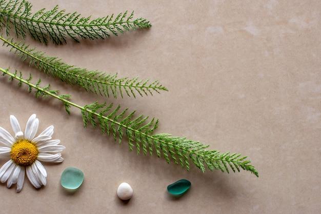 Płaski widok trzy zielone gałązki rośliny z rumiankiem i kamieniami z miejsca na kopię
