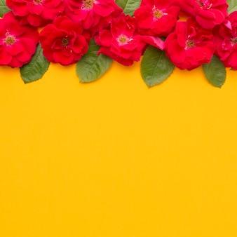 Płaskie leżały róże lodowe i liście z miejscem do kopiowania