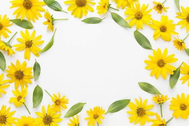 Płaskie leżały żółte stokrotki ramki