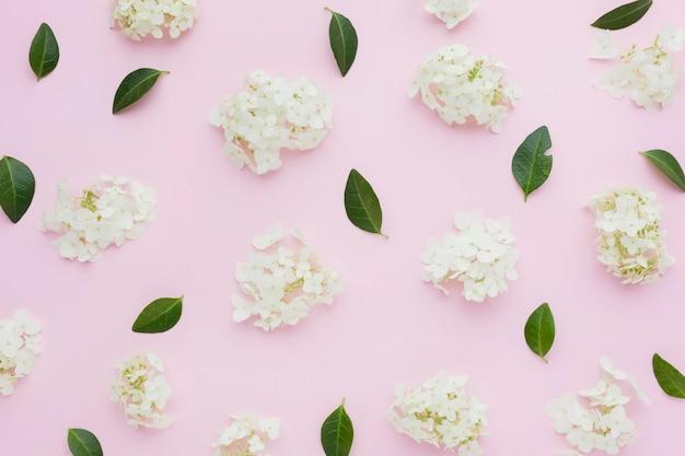 Płaskie lilie i liście