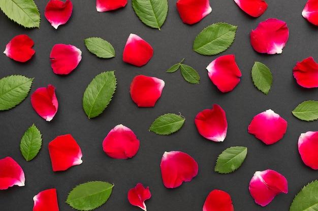 Płaskie płatki i liście róż lodowych