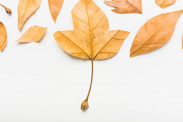 Płaskie ukształtowanie jesiennych liści