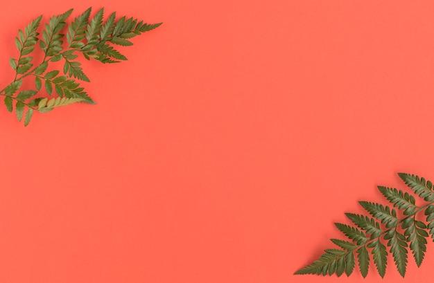 Płaskie ukształtowanie naturalnych kosmetyków z liśćmi