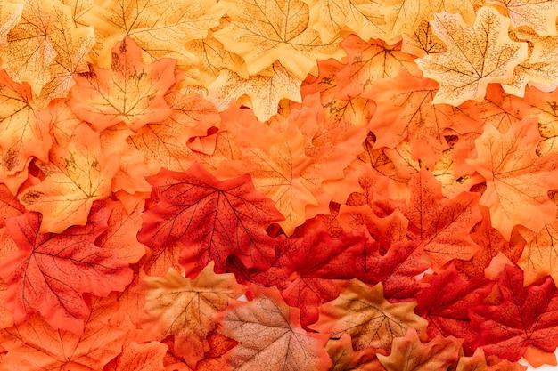 Płaskie ukształtowanie powierzchni liści jesienią