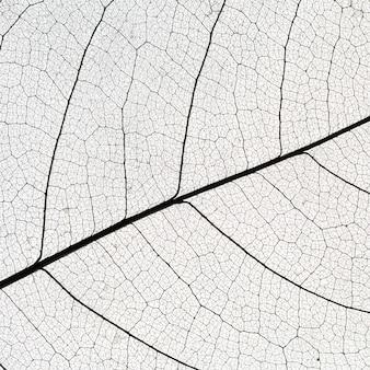 Płaskie ukształtowanie przezroczystej tekstury liścia