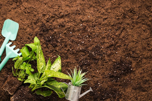 Płaskie ukształtowanie roślin i narzędzi ogrodniczych z copyspace