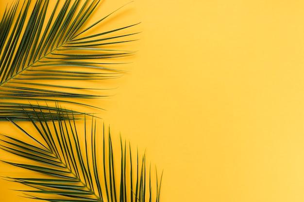 Płaskie ukształtowanie tropikalnych liści z copyspace