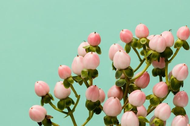 Płaskie ukształtowanie wiosennych pąków kwiatowych