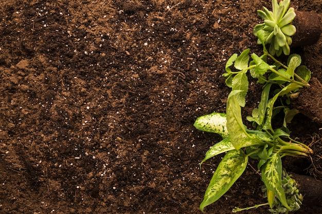 Płaskie ukształtowanie zielonej rośliny