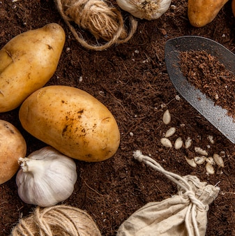 Płaskie ułożenie czosnku i ziemniaków