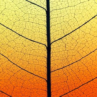 Płaskie ułożenie kolorowych liści z półprzezroczystą teksturą