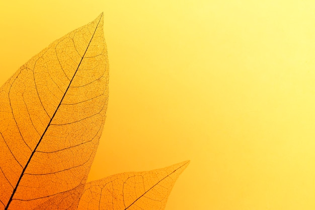 Płaskie ułożenie kolorowych liści z przezroczystą teksturą